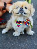 Το σκυλί συμμετέχει στην παρέλαση υπερηφάνειας LGBT στην πόλη της Νέας Υόρκης Στοκ Εικόνες