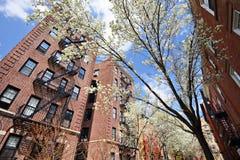 Lägenheter på våren Arkivfoton