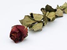 lgift αγάπη Στοκ Εικόνα