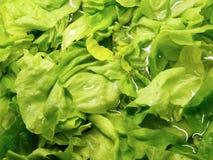 Légumes feuillus Photos libres de droits