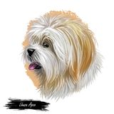 Lhasa apso pet with white fur, portrait of canine digital art illustration. Non-sporting dog breed originating in Tibet. Indoor-monastery sentinel doggy. Pet royalty free illustration