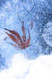 Liść i bąble marznący w lodzie obraz royalty free