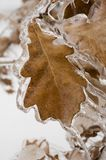 Liść obramowany w lodzie zdjęcie royalty free