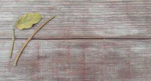 Liście na starym drewnie zdjęcie royalty free