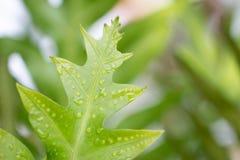 Liście na zielonym natury i pomarańcze tle zdjęcie stock