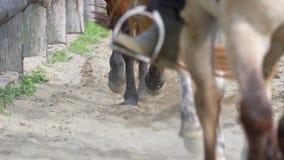 Lições de equitação filme