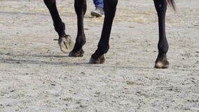 Lições de equitação video estoque