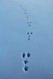Lièvres en hiver photo stock