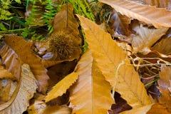 liść ściółka Fotografia Stock