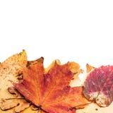 Liść ściółka below, pusta przestrzeń nad liście i Zdjęcie Royalty Free