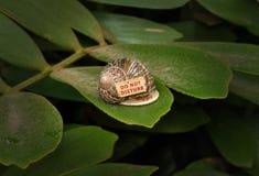 liść ślimaczek Fotografia Stock