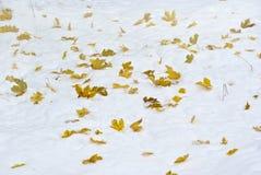 liść śnieg Obrazy Stock