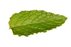 liść świeża mennica Zdjęcie Stock