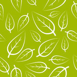 liść świeża zielona tekstura Zdjęcie Royalty Free