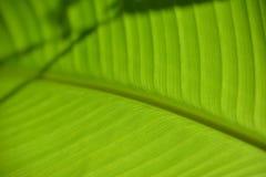 Liść żyła z teksturą szczegółowo zdjęcia stock
