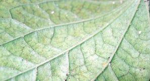 liść żyły Zdjęcia Royalty Free