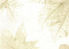 liść żyły Obrazy Royalty Free