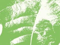 Liść żyły tekstury Wektorowy tło royalty ilustracja