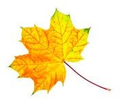 liść Zdjęcie Royalty Free