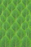 liść Obrazy Stock