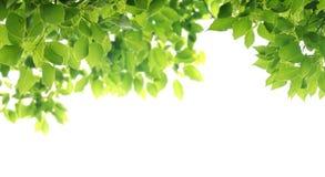 liść Zdjęcia Stock
