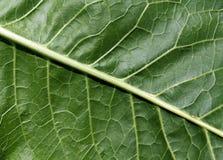 liść abstrakcjonistyczna zielona tekstura Obrazy Royalty Free
