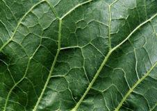 liść abstrakcjonistyczna zielona tekstura Obraz Stock
