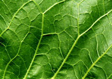 liść abstrakcjonistyczna zielona tekstura Obrazy Stock