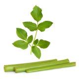liść arcydzięgielowi zielarscy trzony Zdjęcia Stock