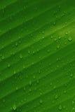 liść banana Zdjęcie Stock
