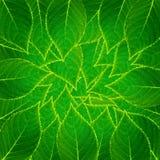liść bezszwowy deseniowy Zdjęcia Royalty Free