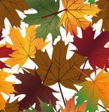 liść bezszwowy deseniowy Obraz Royalty Free