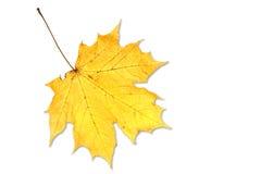 liść biel Obraz Royalty Free