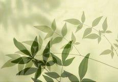 liść cienie Obrazy Royalty Free