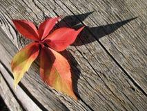 liść czerwień Obrazy Royalty Free
