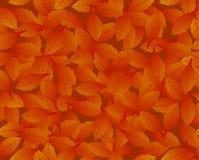 liść deseniują bezszwowego Obrazy Royalty Free