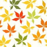liść deseniują bezszwowego Fotografia Stock