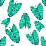liść deseniują tropikalnego Zielony liścia monstera bezszwowy ilustracja wektor