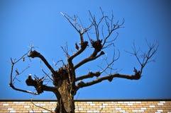 liść drzewo Obrazy Royalty Free