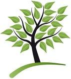 liść drzewo Zdjęcie Royalty Free