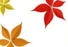 liść graniczny jesieni Obraz Royalty Free
