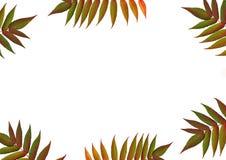 liść graniczny jesieni Zdjęcia Royalty Free