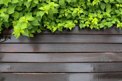 liść i świeży mokry drewniany tło Zdjęcia Stock