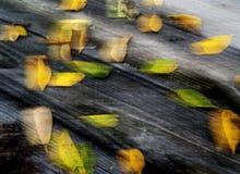 Liść I Drewno Obrazy Stock