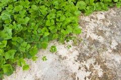 Liść i kamień Zdjęcie Stock