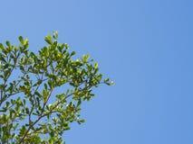 Liść i niebieskie niebo Fotografia Royalty Free