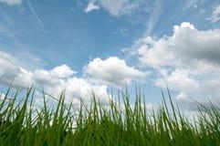 Liść i niebo Zdjęcia Stock