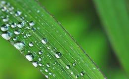 Liść i raindrops Zdjęcie Stock
