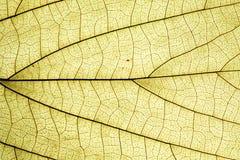 liść jaskrawy powierzchnia Zdjęcia Stock