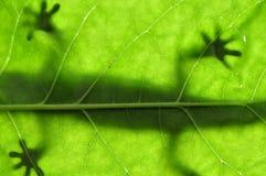 liść jaszczurka Zdjęcie Royalty Free